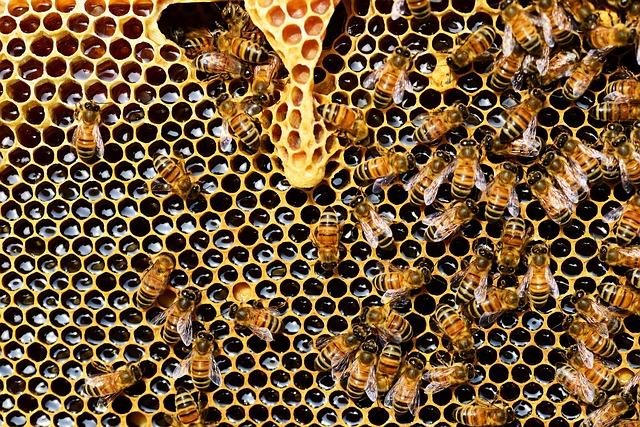 abeilles dans ruche